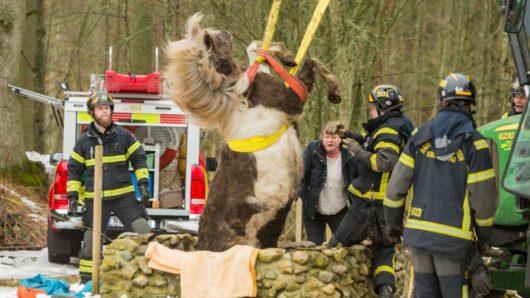 В Швеции лошадь упала в колодец