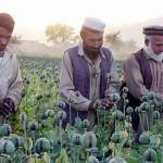 За время оккупации Афганистана объём производства героина вырос в 20 раз