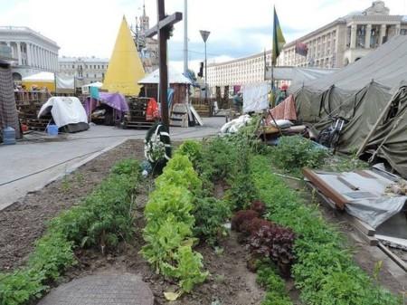 Огород на Майдане