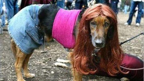 Изображение собаки, одетой как женщина-проститутка